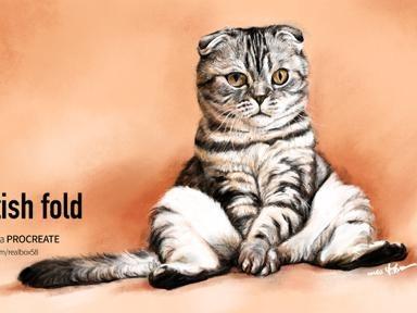 아이패드로 그림 그리기 - 스코티쉬폴드 고양이